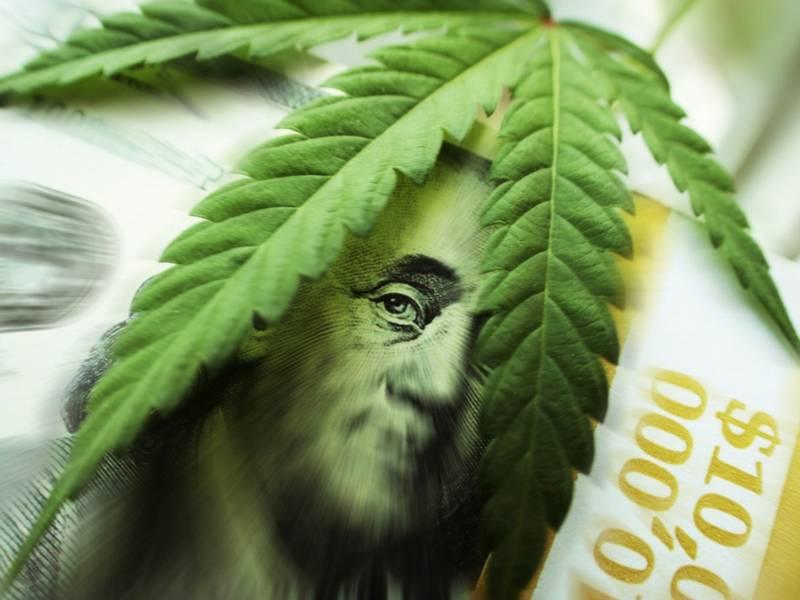 Jason Spatafora, Wolf of Weed Street, Marijuana Stocks